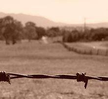 Barbed Wire  by Jaf76