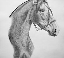 """Argentinian Beauty"" - Criollo mare by SD 2010 Photography & Equine Art Creations"