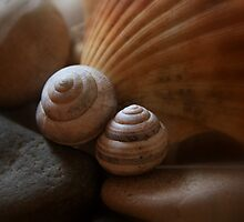 Shells & Rocks by i l d i    l a z a r