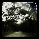 road to wormsloe by Shannon Byous Ruddy