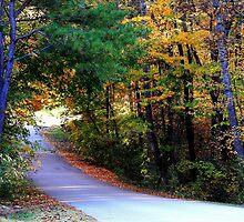 Natchez Trace Lane by Ginger  Barritt
