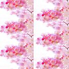 Japanese Cherry Blossoms by Delights