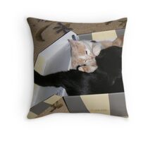 Box Fighting Wild Bill Hickock kitten and Matilda Throw Pillow