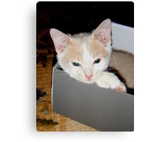 Ah this box is comfy Wild Bill Hickock Kitten Canvas Print