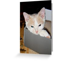 Ah this box is comfy Wild Bill Hickock Kitten Greeting Card