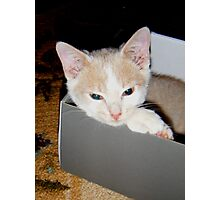 Ah this box is comfy Wild Bill Hickock Kitten Photographic Print