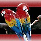 Parrots by CarolM