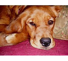 Penny goes sigh Photographic Print