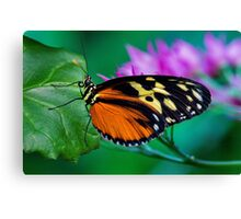 A Splash of Colour Canvas Print
