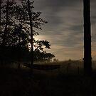 hammock at misty night by mtths