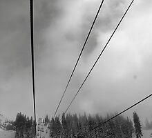 Snowbird by lizjensen