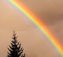 All the colours of the rainbow by Elana Bailey