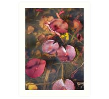 plant types #51, water lilies in spring Art Print