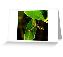 Crane Fly Greeting Card