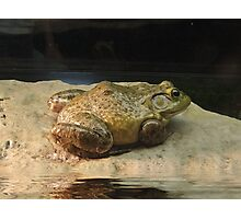 MR TOAD Photographic Print