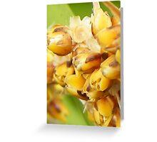 prickly plant - macro Greeting Card
