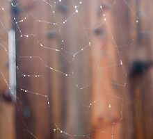 Raindrops on Spiderweb by Jennifer Rose Clement