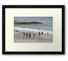 Magellanic Penguins on the Beach Framed Print