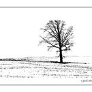 Waiting For Spring by jules572