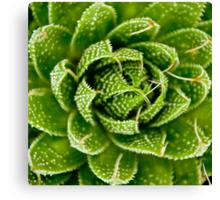 Cactus Hypnosis Canvas Print