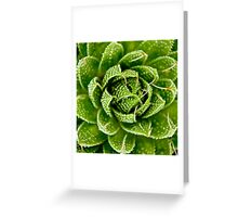 Cactus Hypnosis Greeting Card