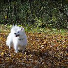 Sylvie the Wonder Dog | Posing in the autumn leaves  by Jack McCabe