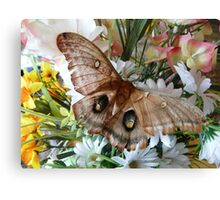 Butterfly Kisses Flowers Canvas Print