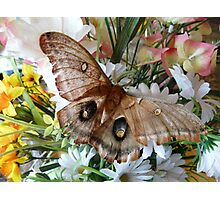 Butterfly Kisses Flowers Photographic Print