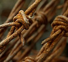 Barbed wire macro by gamaree L