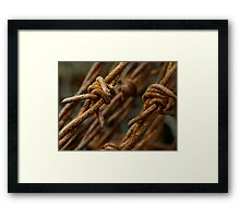 Barbed wire macro Framed Print