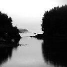 Elfin Cove by Jake Freeedman