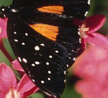 Janius Patch Butterfly Sticker