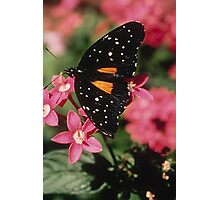 Janius Patch Butterfly Photographic Print