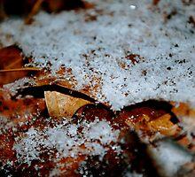 Snow Fall by Trenton Purdy