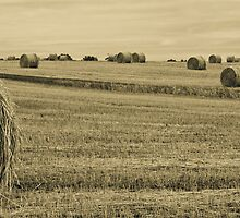 Hay Bales. by Ryan Carter