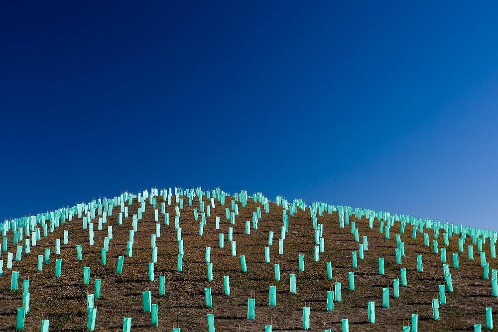 In Memory of Fallen Trees by John Robb