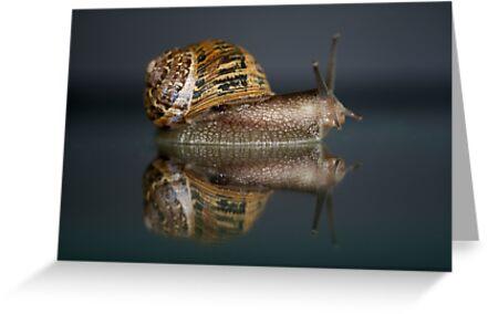 Reflections of a Snail by Pene Stevens