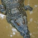 Thai Croc by Frank Yuwono