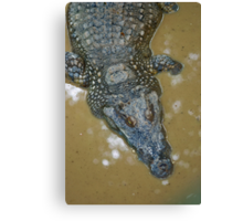 Thai Croc Canvas Print