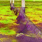Net by TerraChild