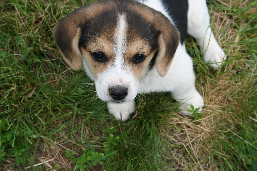 Puppy eyes by natnvinmom