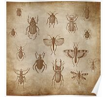 Collection of Insects - vintage Expedition Poster