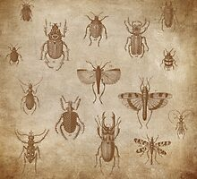 Collection of Insects - vintage Expedition by Tee Brain Creative