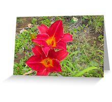 Two Red Daylillies, Hemerocallis Greeting Card