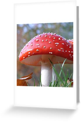 Fly Agaric by mikebov