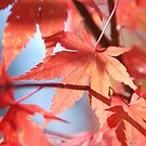 Autumn colours by Rhona