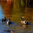 Early Autumn Swim by Sandy Woolard