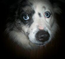 blue-eyed Dog by T.L. Parks