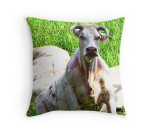 Ever seen a Cow sitting on it's Hunches?????????????????????? Throw Pillow