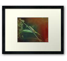 Fuzzy Caterpillar Framed Print